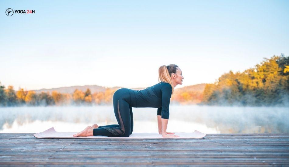 Yoga buổi sáng tư thế con bò cow pose